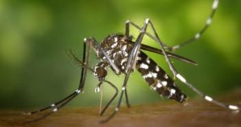 mosquito-735x459