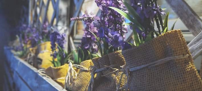 Αυτά τα δύο φυτά θα σας κάνουν να αισθανθείτε καλύτερα (εικόνες ... c2955664e97